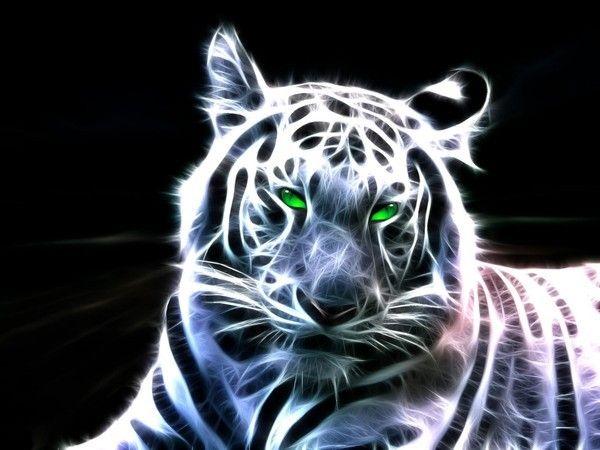 Animal Wallpapers Desktop Images Free Wallpapers Cute: Tigre Blanc